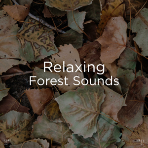 "Nature Sounds Nature Music & Nature Sounds - !!"" Relaxing Forest Sounds ""!!"