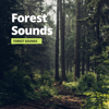Sleep Atmospheres, Relaxation Channel & Forest Sounds - Forest Sounds