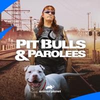 Télécharger Pit Bulls and Parolees, Season 17 Episode 6