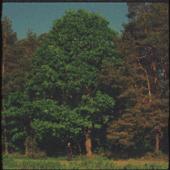Małomiasteczkowy - Dawid Podsiadło