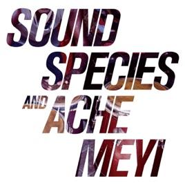 サウンズピーシス & Ache Meyiの...