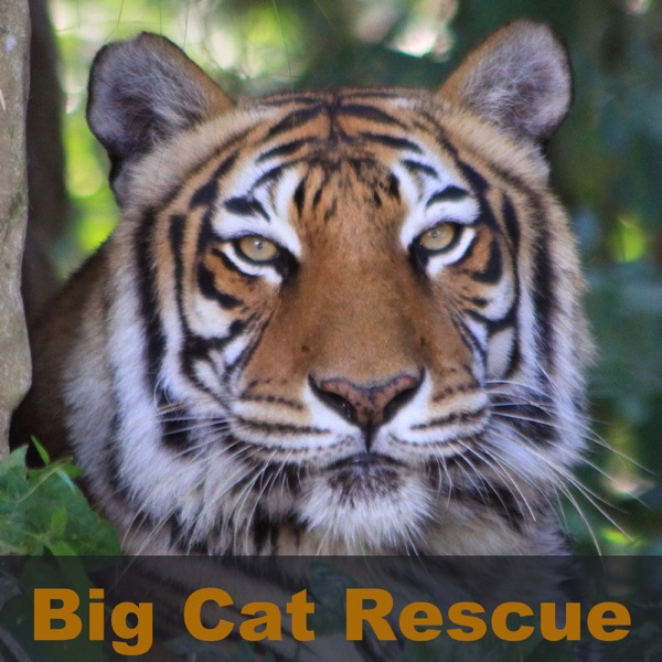 itunes – Big Cat Rescue