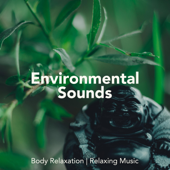 Environmental Sounds For Body Relaxation, Relaxing Music, Asian Instrumental Songs-Total Relax Ensemble
