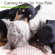 Puppy - My Sweet Puppy Dog - Pet Care Music Therapy