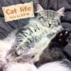 Cat life ジャケット画像