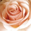 Best Flower - B Side Collection ジャケット写真