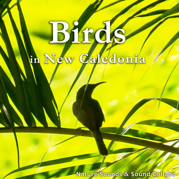 Birds in New Caledonia - Single by Nature Sounds & Sound Collabo