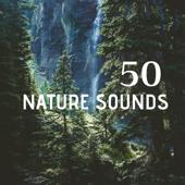 50 Nature Sounds