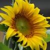 Let the Sun Shine - Single, Page