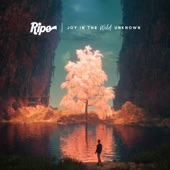 Ripe - Downward