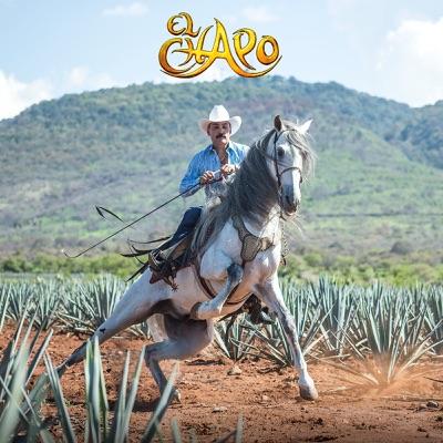 Emergencia en la Ciudad (Version Mariachi) - Single - El Chapo De Sinaloa
