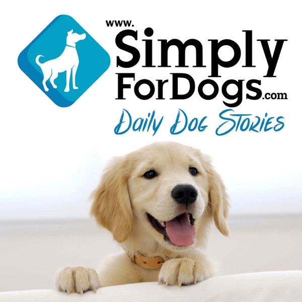 Simply For Dogs|Franklin Medina discusses the latest dog tips,  dog strategies, dog training,  and everything related to dogs