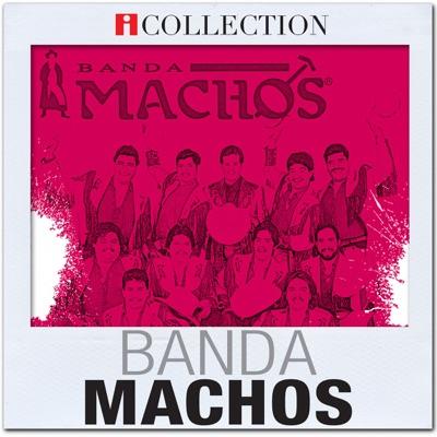 iCollection - Banda Machos