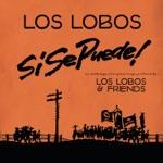 Los Lobos & Carmen Moreno - Corrido De Dolores Huerta #39