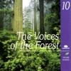 The Voices of the Forest Les voix de la forêt