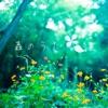 森のうた ジャケット写真