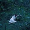 眠りの森 - Single ジャケット写真
