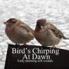 Nature Birds Singing - Auge Espiritual