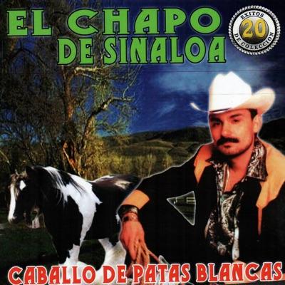 Caballo de Patas Blancas - El Chapo De Sinaloa