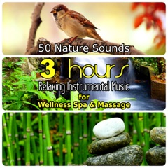 50 Nature Sounds: 3 Hours Relaxing Music for Welness Spa and Massage, Background Instrumental Songs with Singing Birds, Waterfall, Bubbling Brooks & Natural Forest Ambience