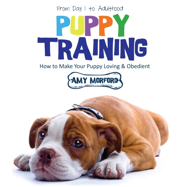 Puppy Training From Day 1 To Adulthood How To Make Your Puppy