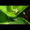 The Green Lagoon - Single - Paul Bouley