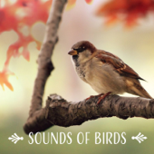 Sounds of Birds: Peaceful Morning Music