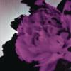 All of Me (Tiësto's Birthday Treatment Remix) [Radio Edit] - John Legend