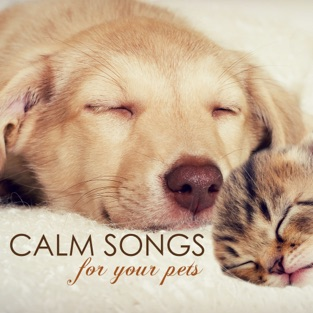 Calm Songs for Your Pets – Calming Music for Pet Cat or Dog, Gentle Sounds to Relax and Calm Down – Pet Care Music Therapy