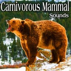 Carnivorous Mammal Sounds