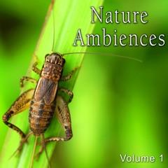 Nature Ambiences, Vol. 1
