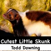 Cutest Little Skunk - Single - Todd Downing