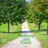 Birds Song and Forest, Vol.1 - EP - Nature Sound Band