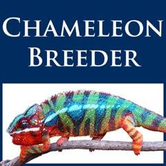 Chameleon Breeder Podcast with Bill Strand