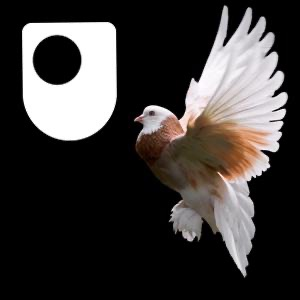 Publishing The Origin of Species - for iPod/iPhone