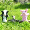 Pinkie The Pig Podcast artwork