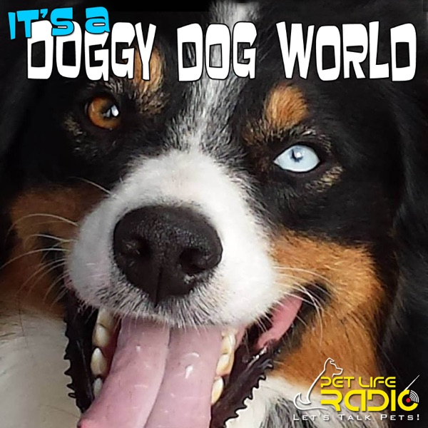 It's A Doggy Dog World - Dog Podcast about dogs as pets & caring for your pet dog, - Pets & Animals on Pet Life Radio (PetLif