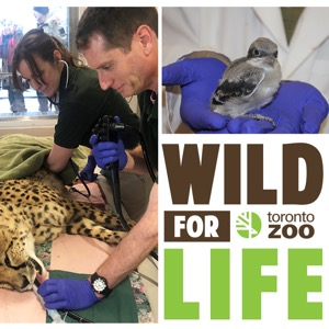 Wild For Life