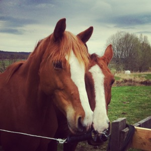 Häst & ryttare - en podcast med Susanna och Tina