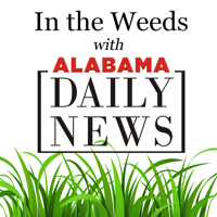 In the Weeds with Alabama Daily News podcast