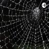 Web of Resonance
