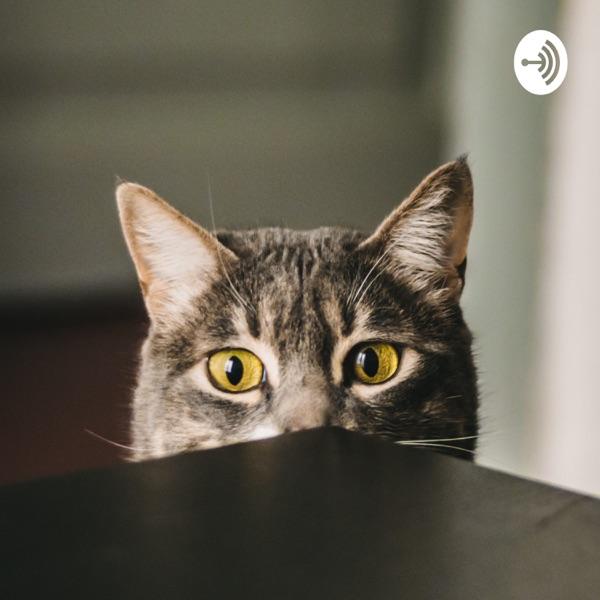 Gak Berani Bilang Podcast