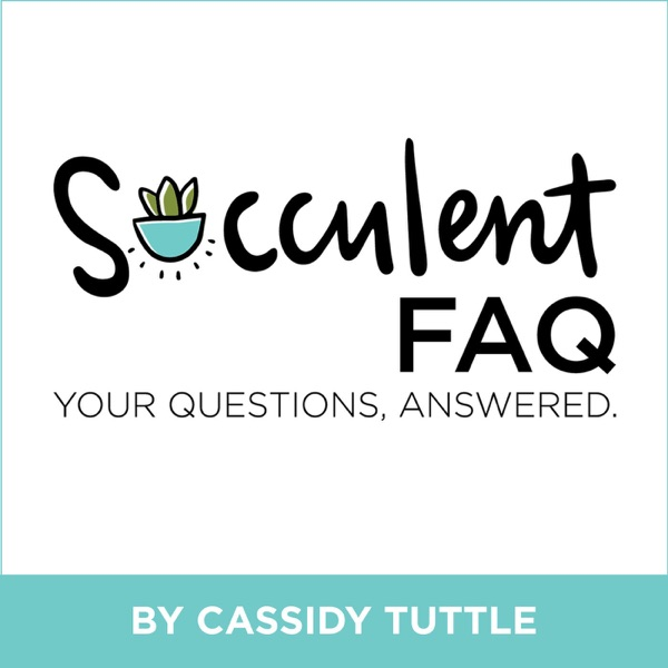 The Succulent FAQ