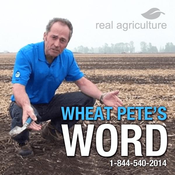 Wheat Pete's Word