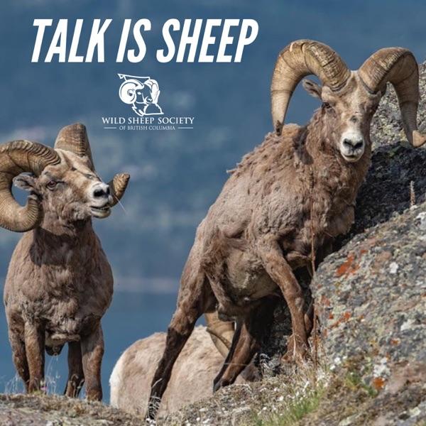 Talk Is Sheep Artwork