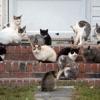 Top Breed cats artwork