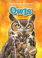 Kari Schuetz - Owls artwork