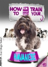 How To Train Your Havanese Dog