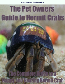 The Pet Owners Guide to Hermit Crabs