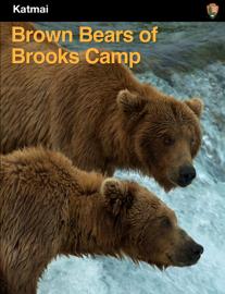 Brown Bears of Brooks Camp
